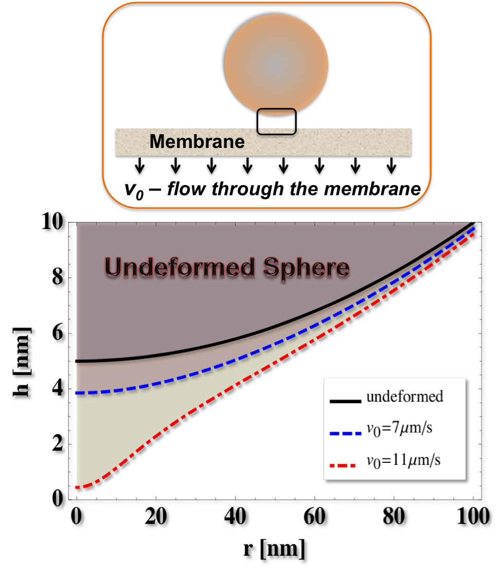 The elasto-hydrodynamic interaction between a particle and a permeable surface