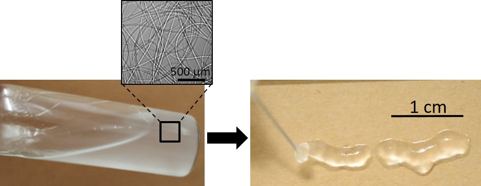 Flow-induced gelation of microfiber suspensions