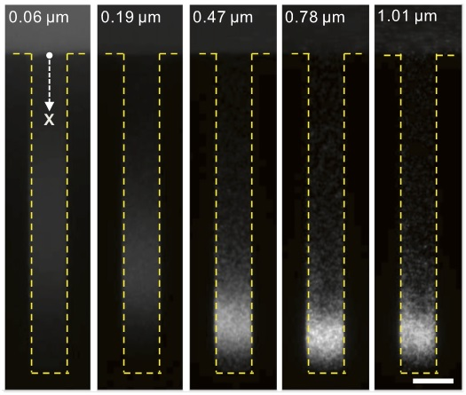 Controlling colloidal particles in confined geometries using solute gradients