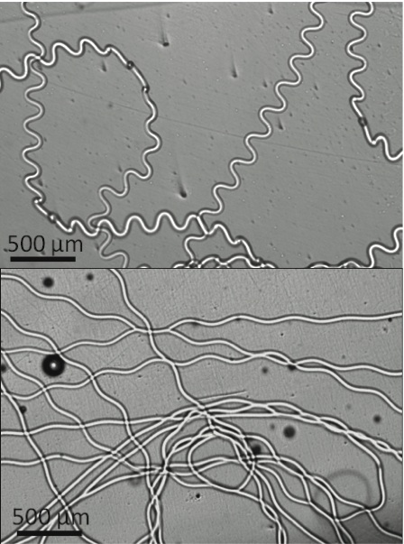 Microfluidic microfiber synthesis
